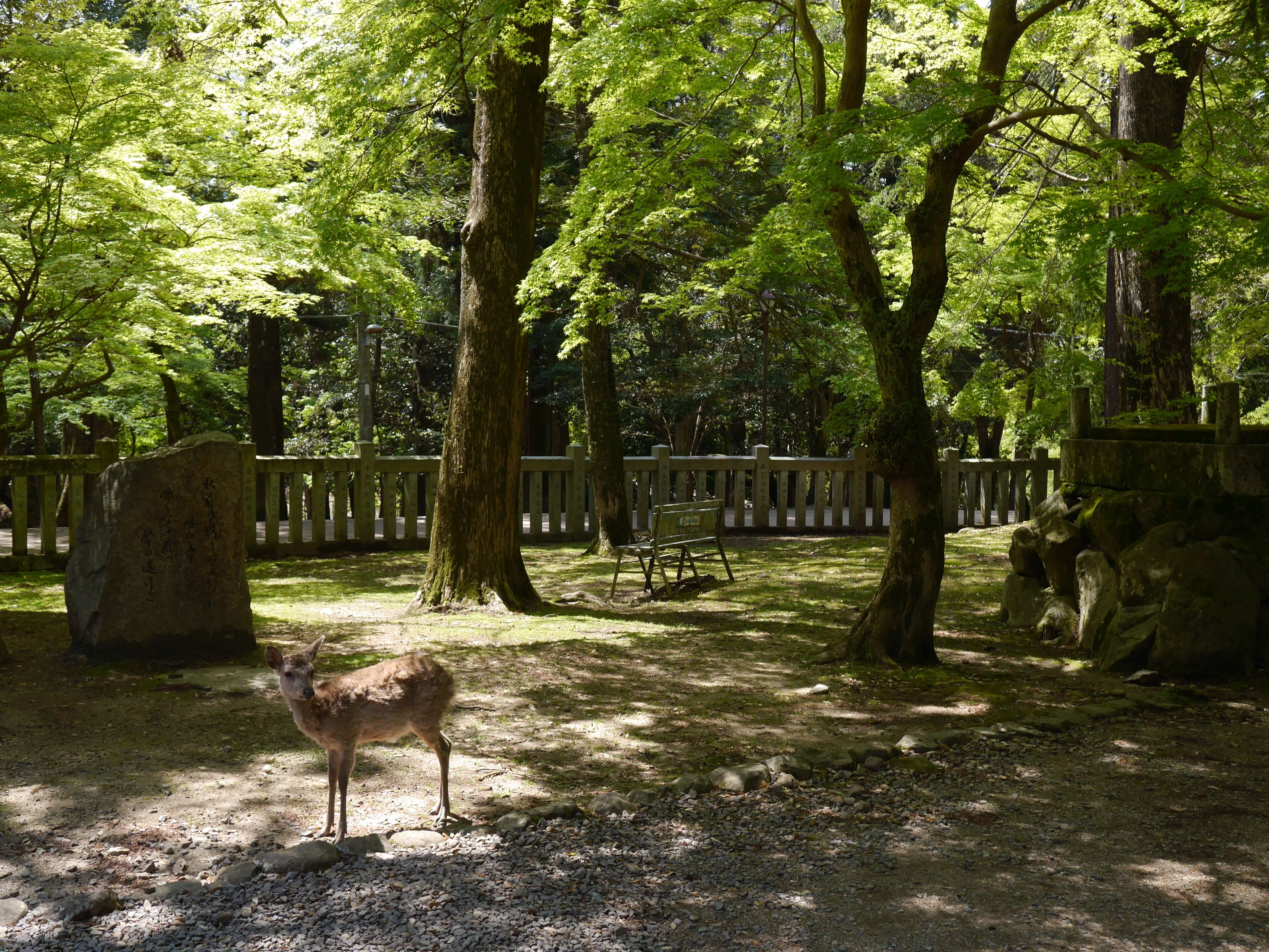 Deer-trees-Nara-Japan