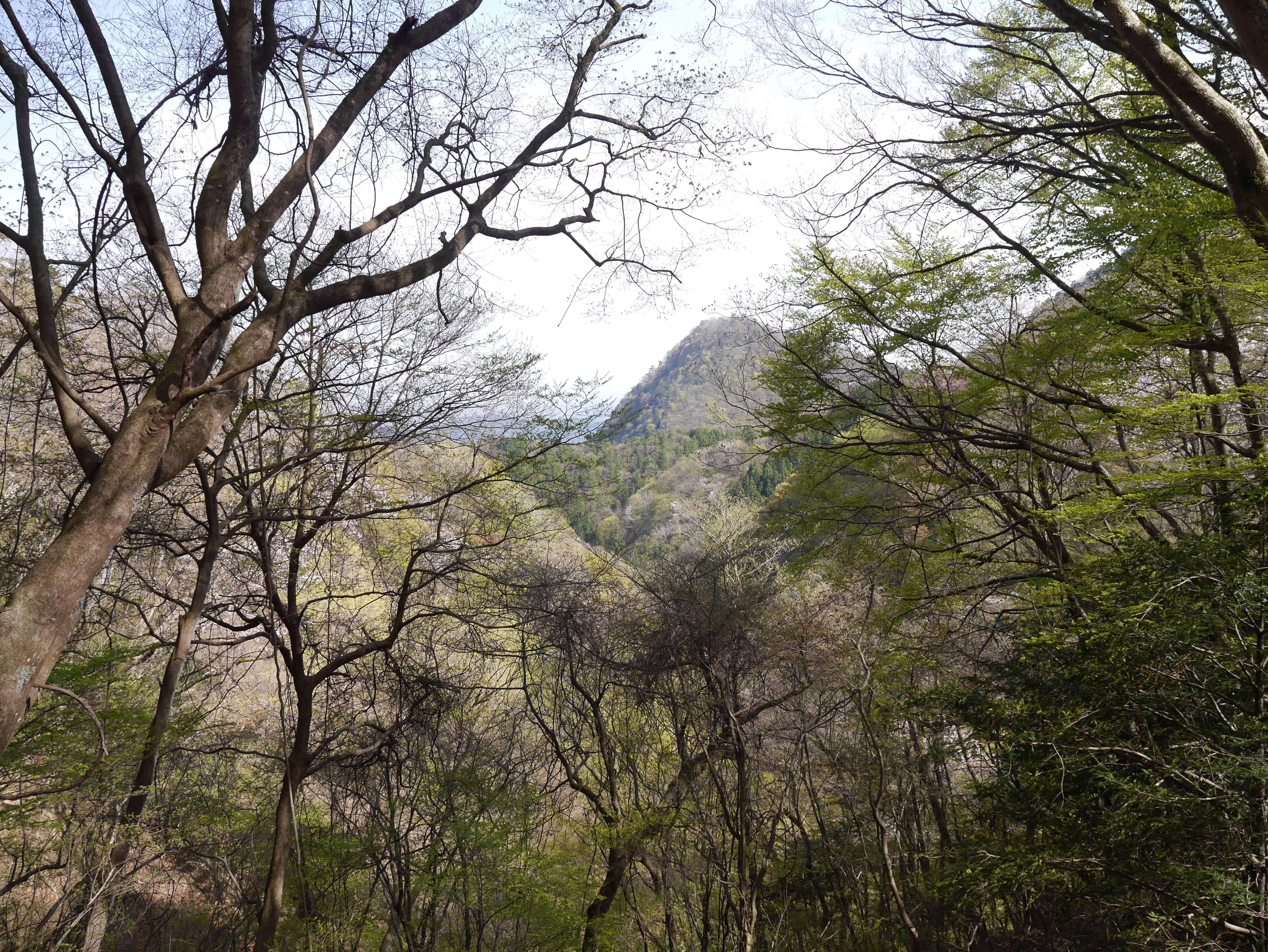 Mount-Mitake-trees-mountains