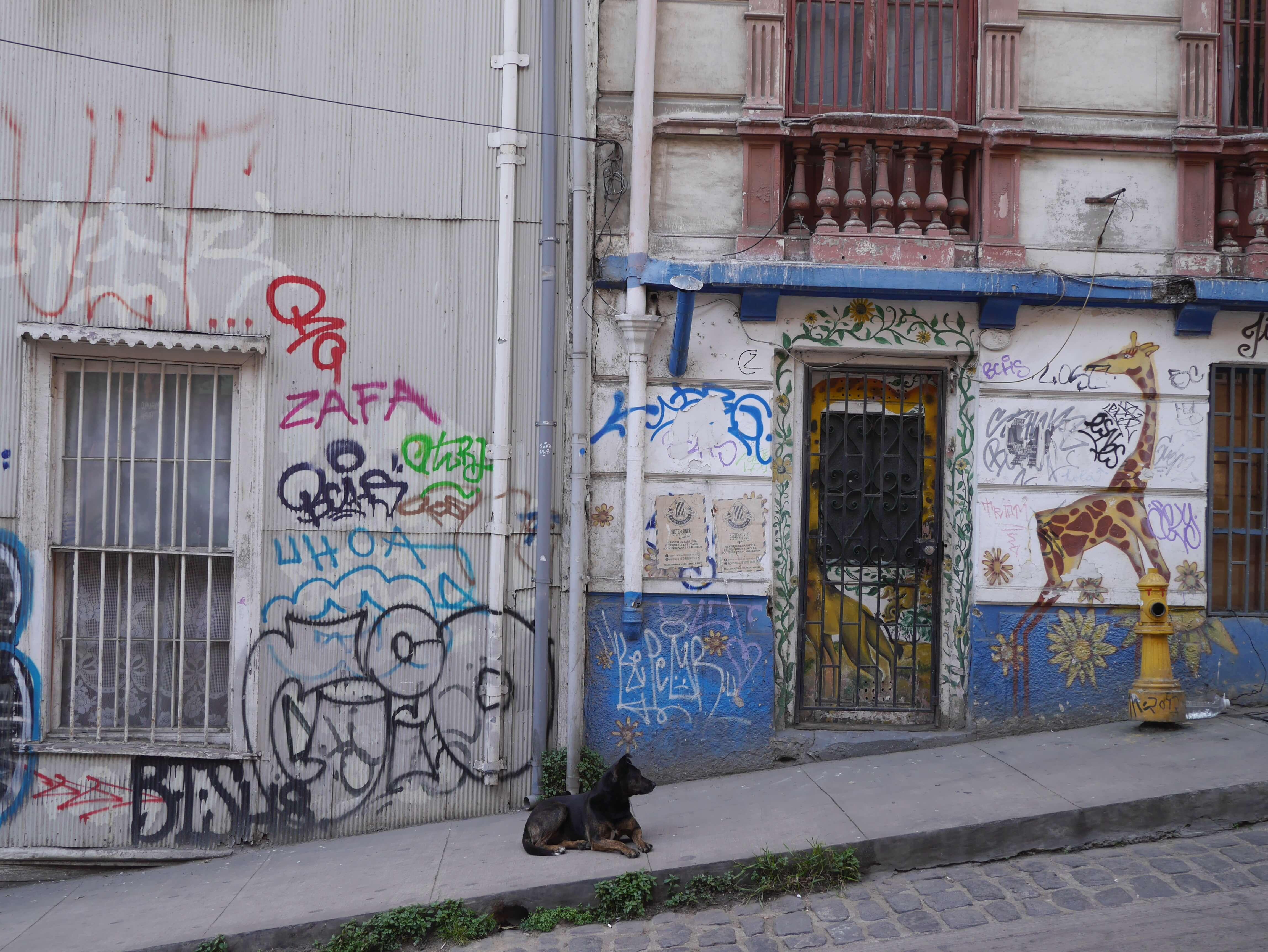 Grafiti-perro-calle-Valparaíso-Chile