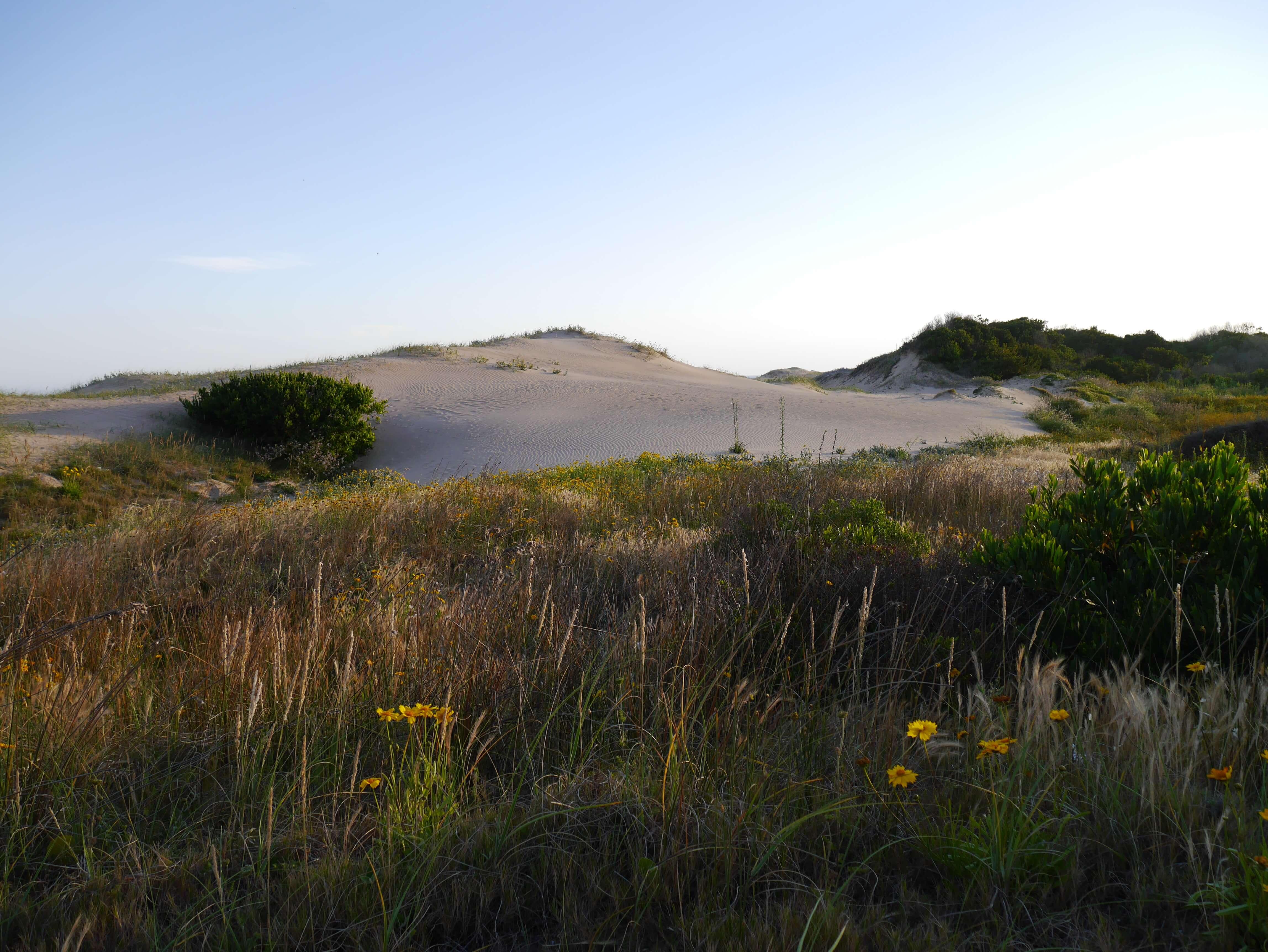 Punta-del-Este-playa-plantas